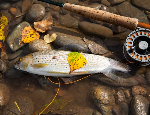 What is Urban Fly Fishing?